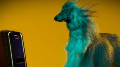 SUPER WOOFERS Este oficial! Câinii o preferă pe Beyoncé în locul lui Beethoven