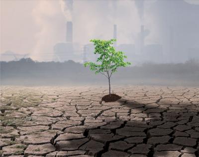 """Daikin a depășit obiectivul campaniei """"Plantăm Aer"""" și  plantează 13.000 de copaci în data de 18 noiembrie"""
