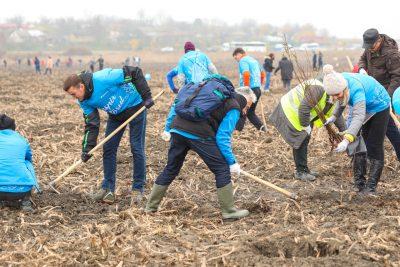 13.000 de copaci plantați de Daikin România  împăduresc 4 hectare de teren degradat